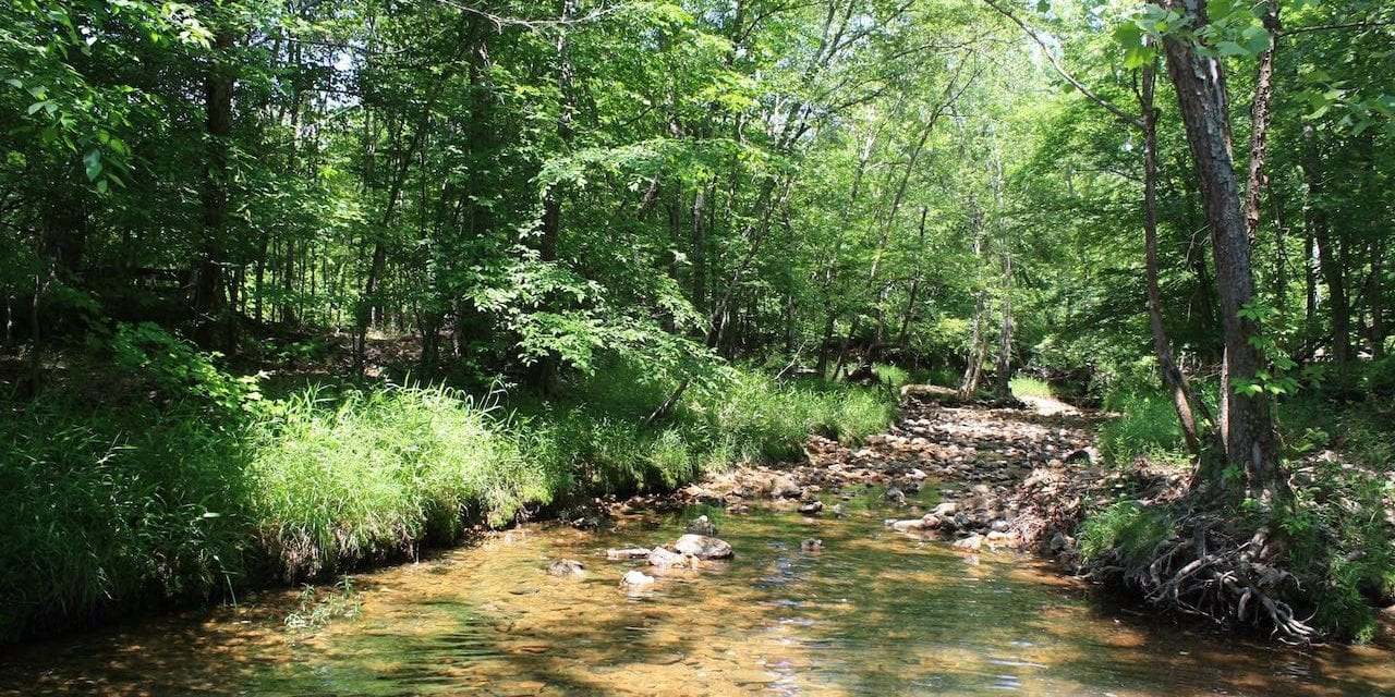 Coldwater State Forest