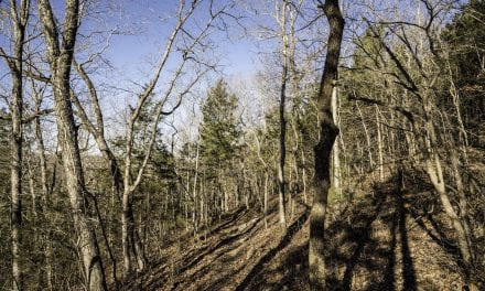 Painter Ridge Trail – Echo Bluff